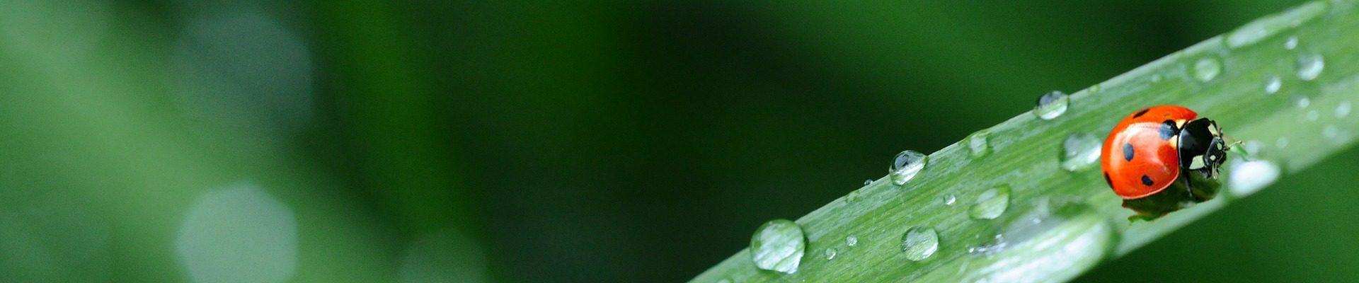 Catégorie: Jardin des lutins verts