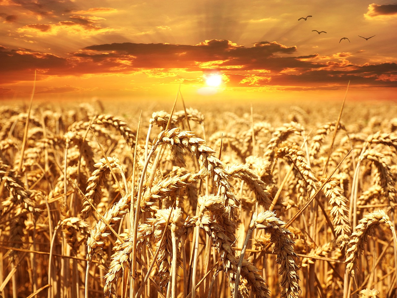 Alimentation et environnement …
