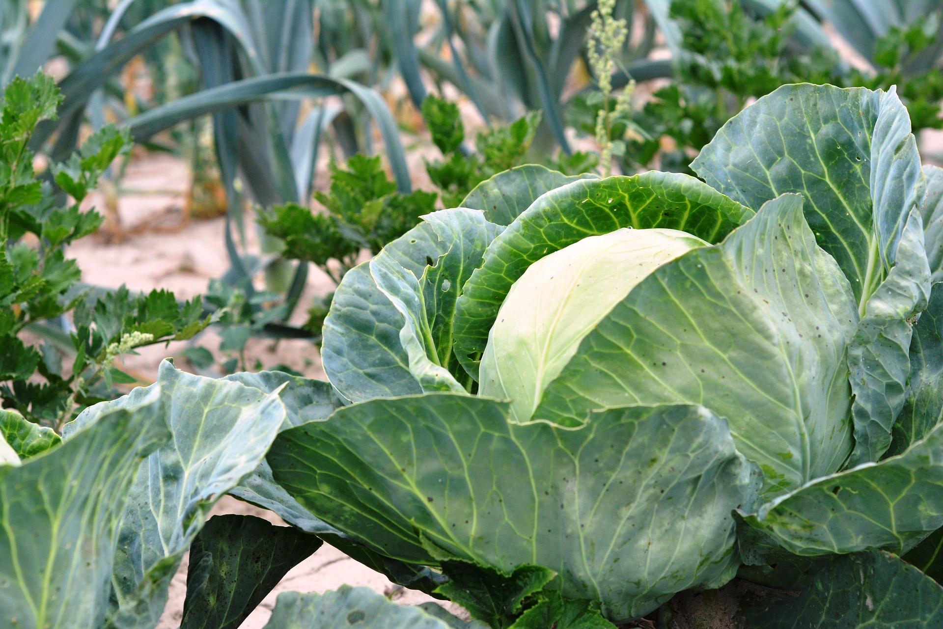 Agroécologie, jardins écologiques