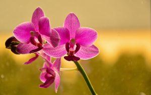 Tout savoir sur la culture des orchidées @ Leroy Merlin Lognes