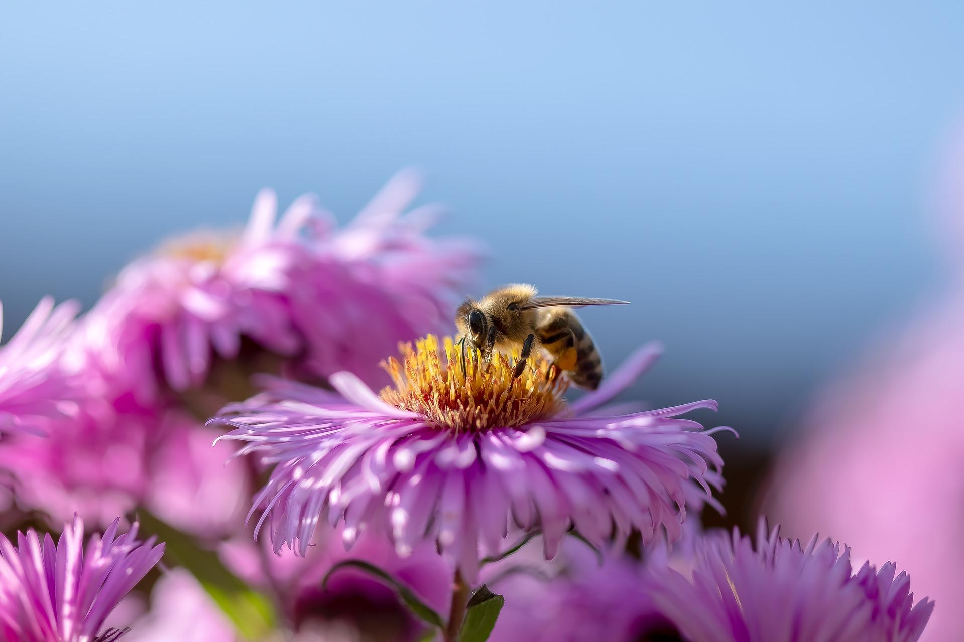 Développer la biodiversité naturelle