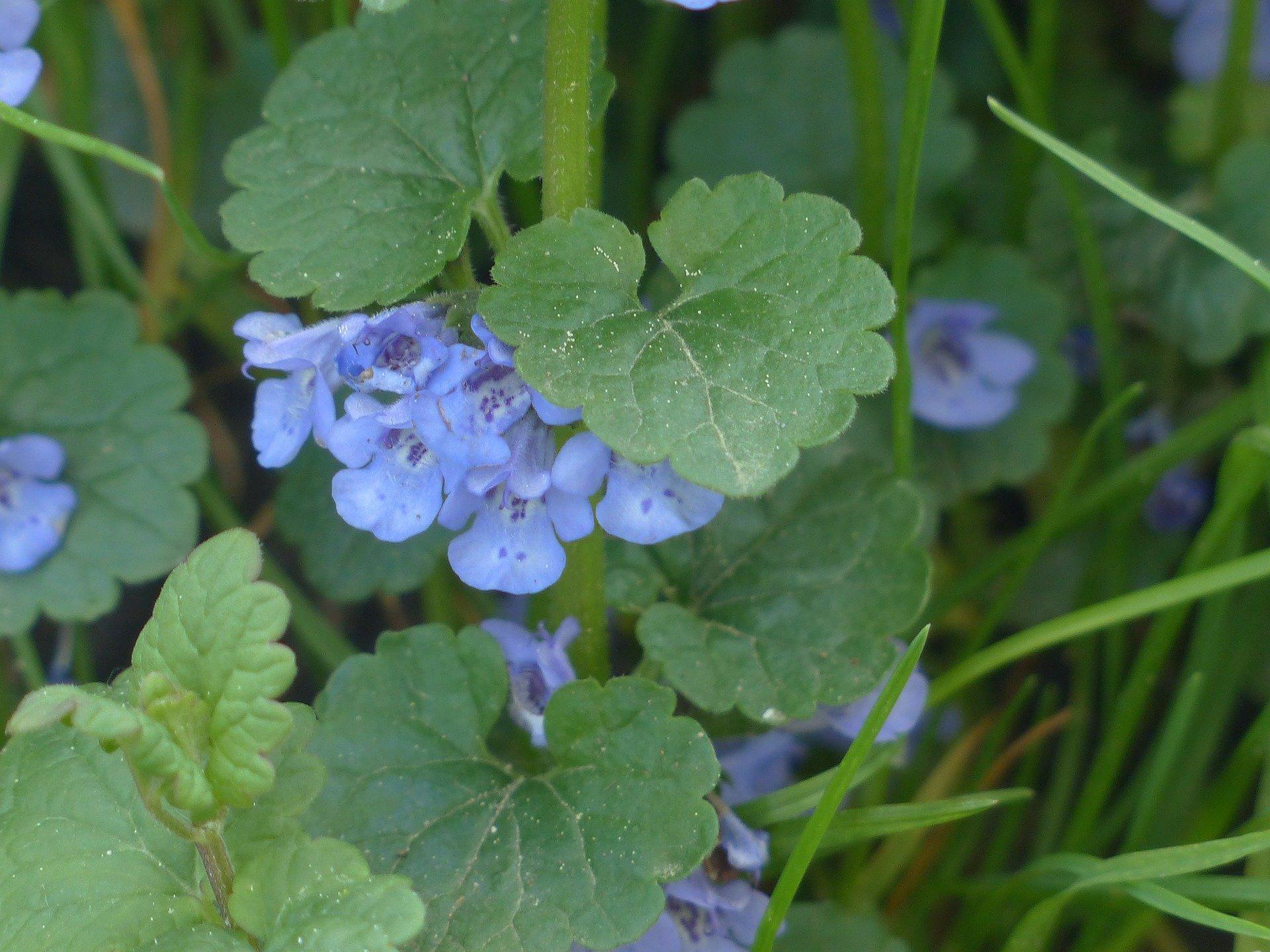 Découvrir les plantes sauvages comestibles