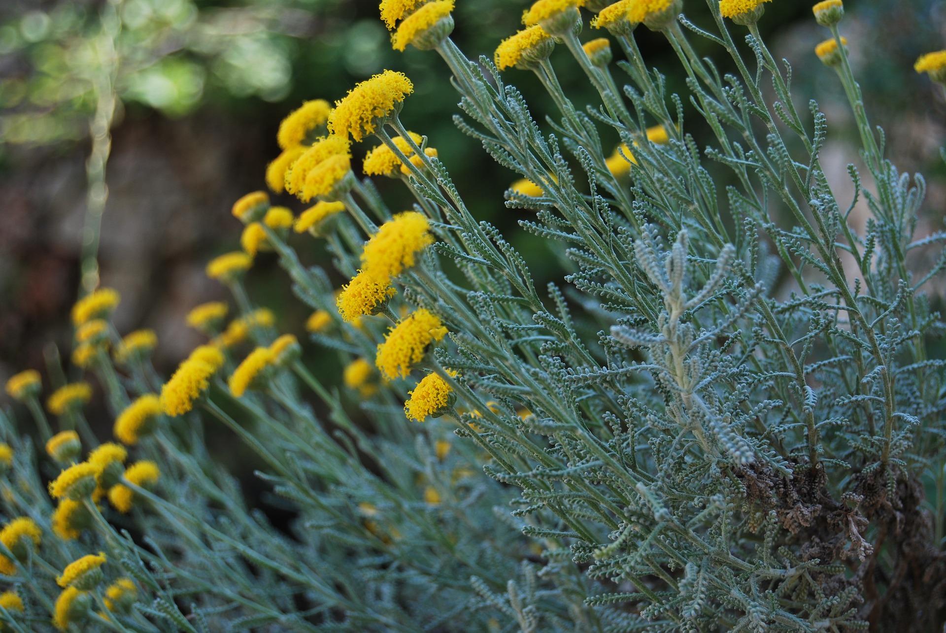 Les plantes qui résistent à la sécheresse