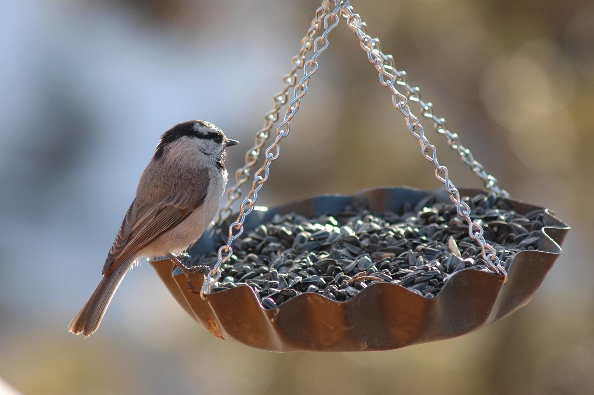 Créer des mangeoires pour les oiseaux