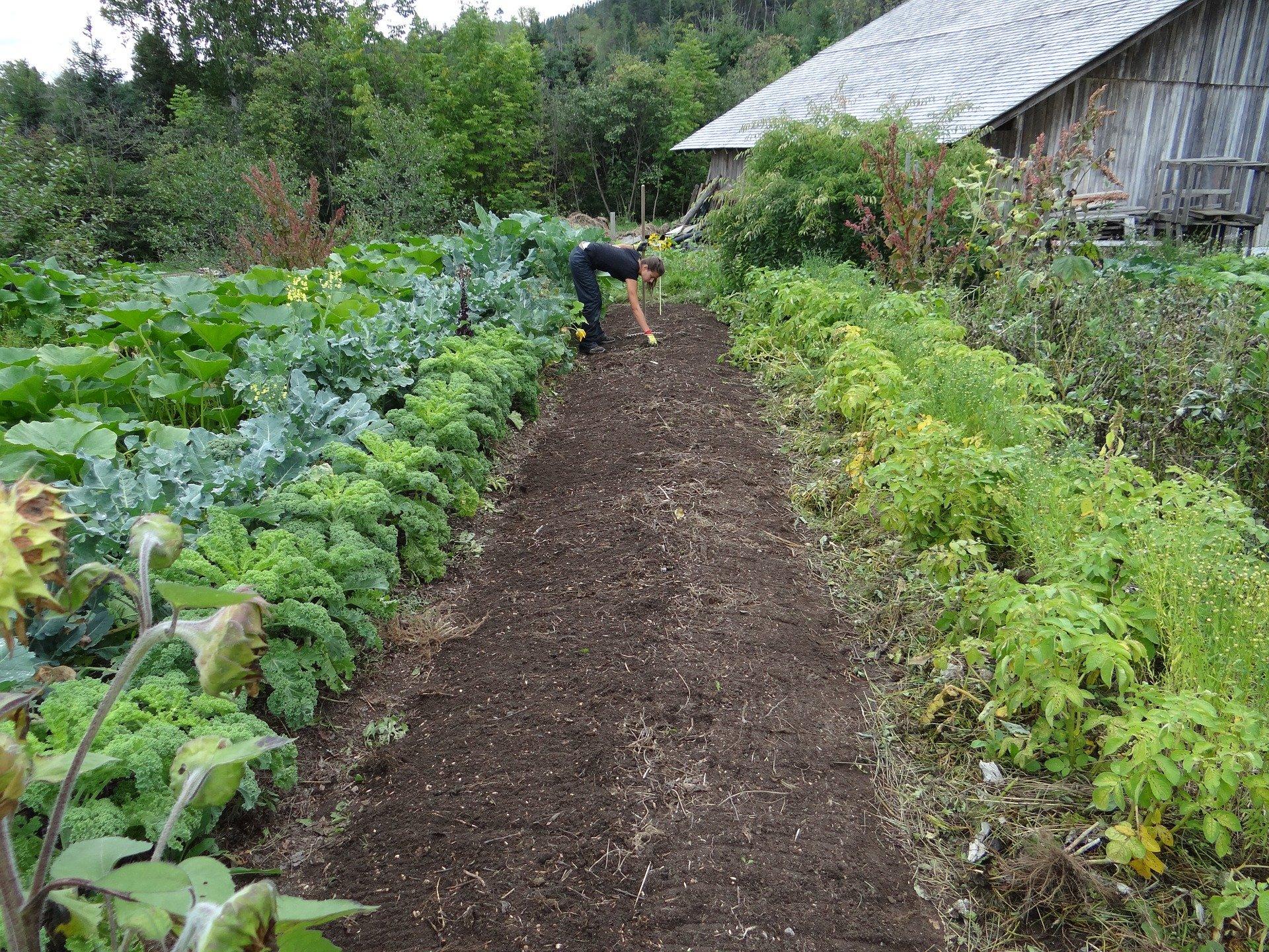 Les formations pratiques en permaculture